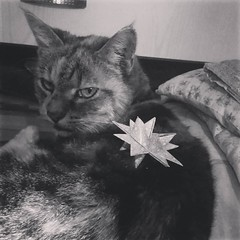 Barbi is not as impressed with my hand-made star as I am #catsofinstagram #christmascat