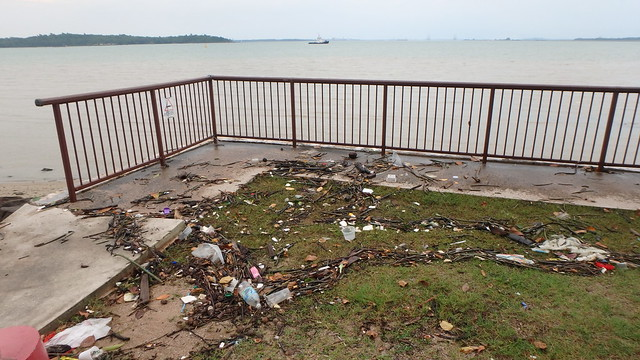 Mangrove seedlings washed up above seawall at Changi