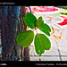 D8B_8118_bis_Foglie_Centro_Bonocore