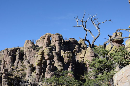 Chiricahua National Monument tree in the hoodoos