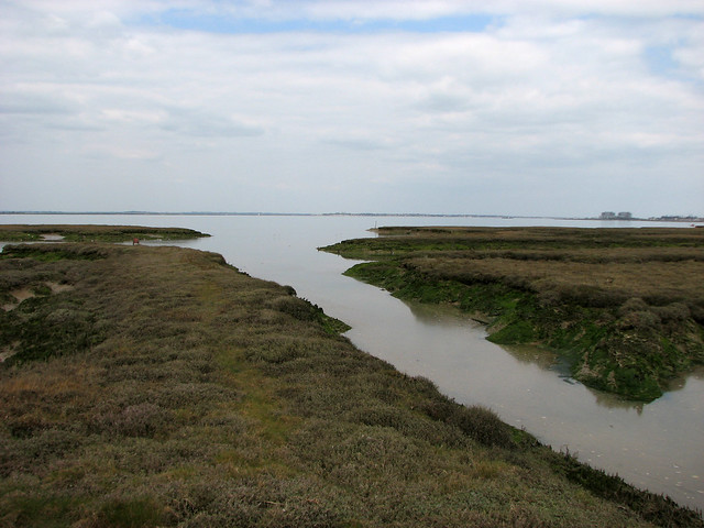 Marshes on St Lawrence Bay