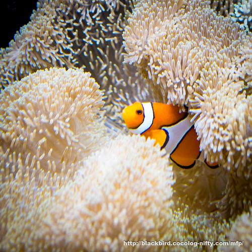 Aquarium 20171115 #05