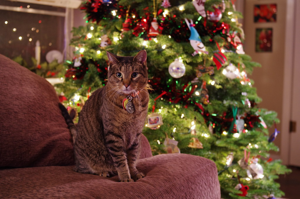 Christmas Cat sitting on an armchair next to a decorated Christmas tree. An ornament with your cat's photo would make unique cat-themed Christmas gifts!