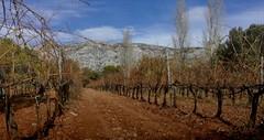 Vignoble de la Montagne Sainte Victoire - Photo of Trets