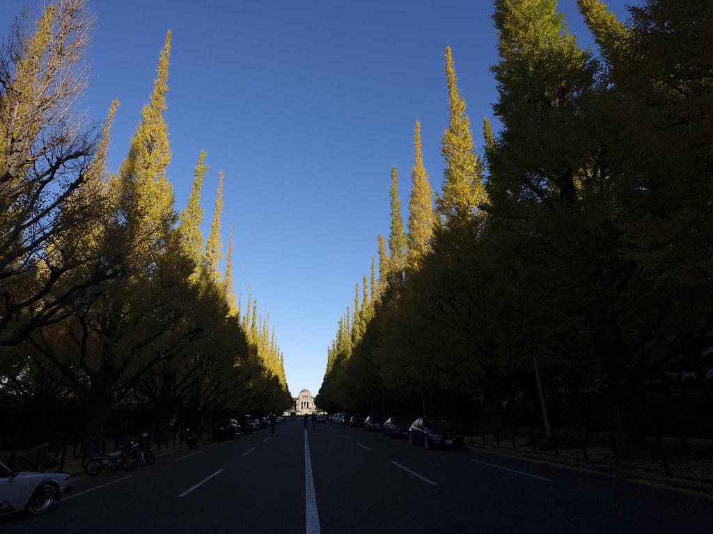 神宮外苑銀杏並木①