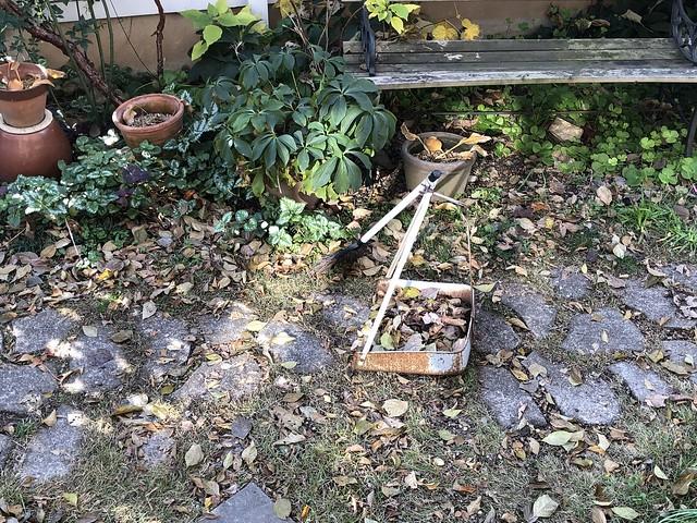 fallen leaves-0
