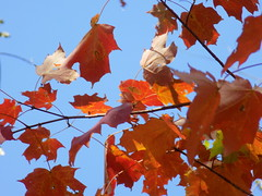 Sky And Autumn Leaves.