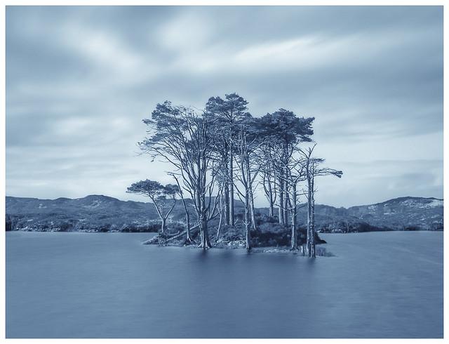 Assynt Trees