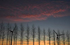 Sunset through the poplars, with wind turbines - Photo of Linzeux