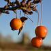 Clinging fruits