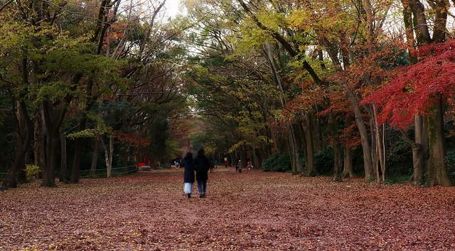 Early Winter / 京都 下鴨神社 糺の森 Kyoto Shimogamo - jinja shrine Tadasu-no-mori Forest