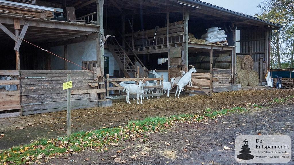 Ziegenkäserei Vulkanhof, Gillenfeld