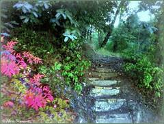 Vieil escalier au coeur de la forêt