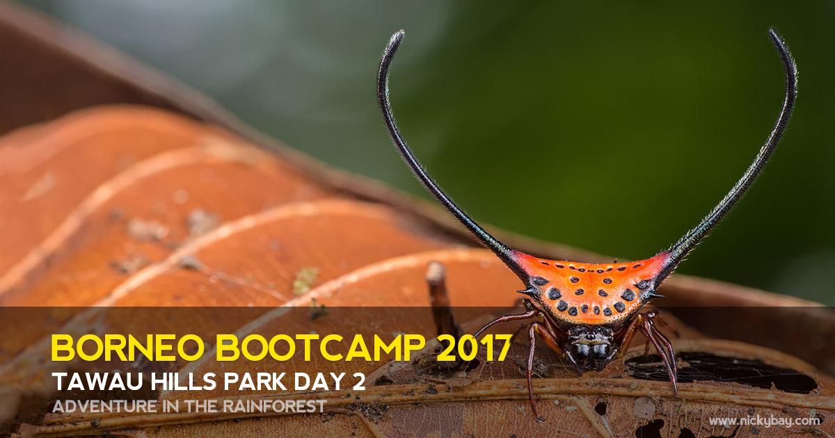 Borneo Bootcamp 2017 - Tawau Hills Park Day 2