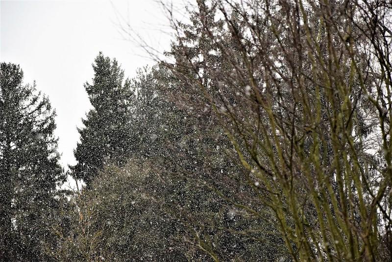 Snow 12.12 (2)