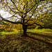 Old tree shadow