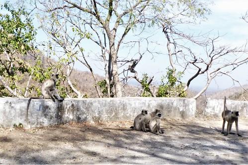i-Kumbhagarh-Ranakpur-route (18)