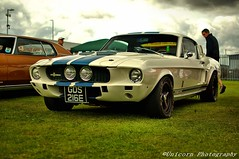 Shelby mustang gt500!