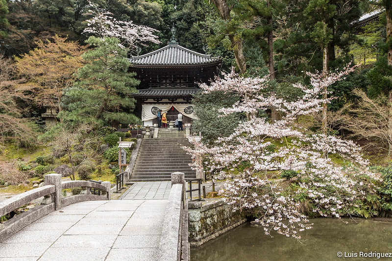Chion-in-25