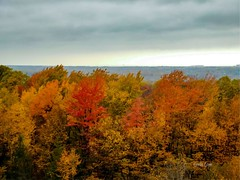 Fall beauty - Chapin Forest