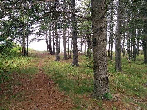 To the edge #pei #princeedwardisland #belfast #campbuchan #scouts #northumberlandstrait #latergram