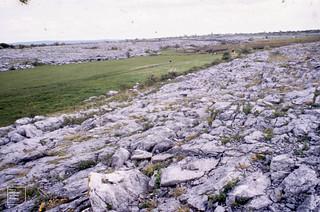 Turlough near Loch Bunny, County Clare. By Alan Lewis 20-27th May 1988