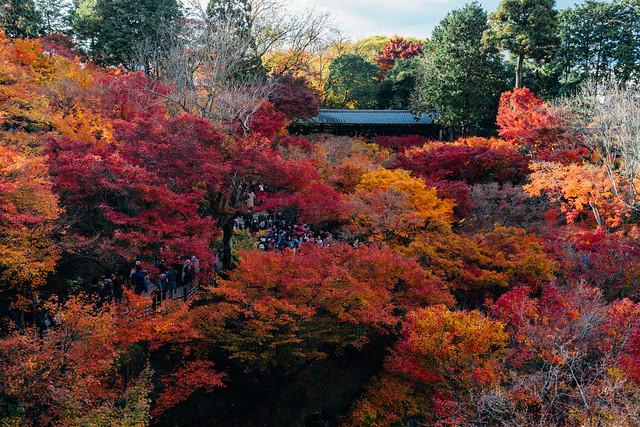 Kyoto_Tofuji_03