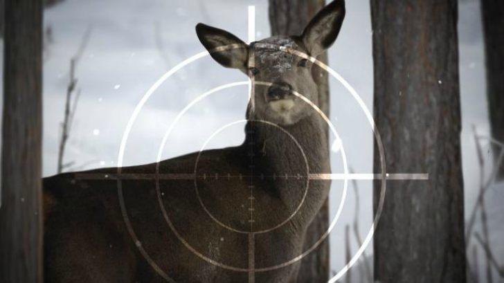 0001Deer+Hunting9