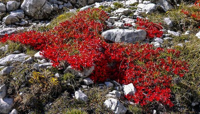 Herbst in Südtirol / Autumn in South Tyrol