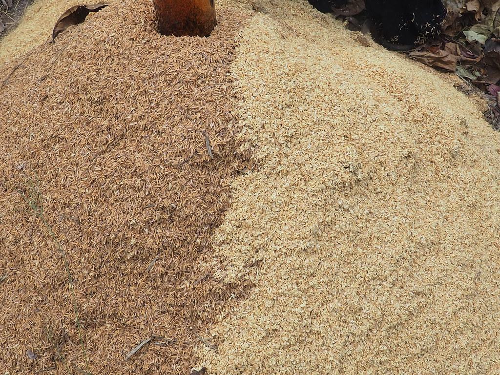 水林小秧自然農場 (14)