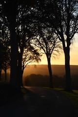 Sunset through the trees - Photo of Framecourt