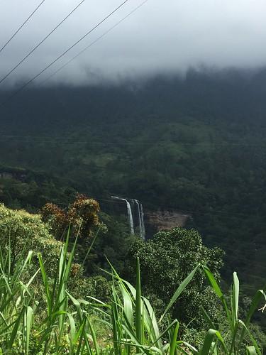 熱帯地方を感じさせる深い森が印象的