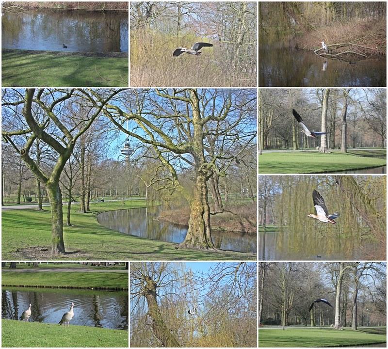 travel-Rotterdam-17docintaipei-歐洲自助旅行-荷蘭鹿特丹- (9)