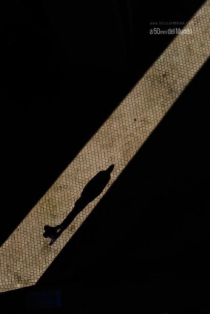 Todos somos sombra