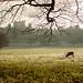 Deer in December