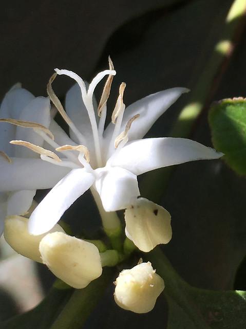 Flowering started