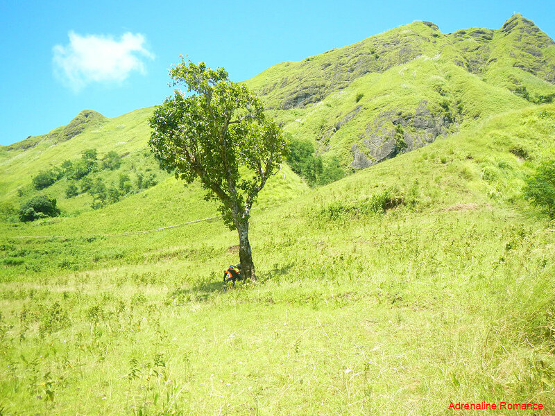 Lone shady tree on Mt. Igcuron's gully