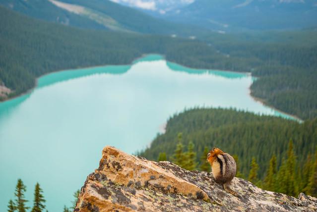 2017 08 - Canada - Banff and Jasper-58.jpg