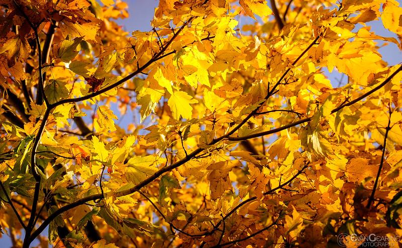 FallFoliage2