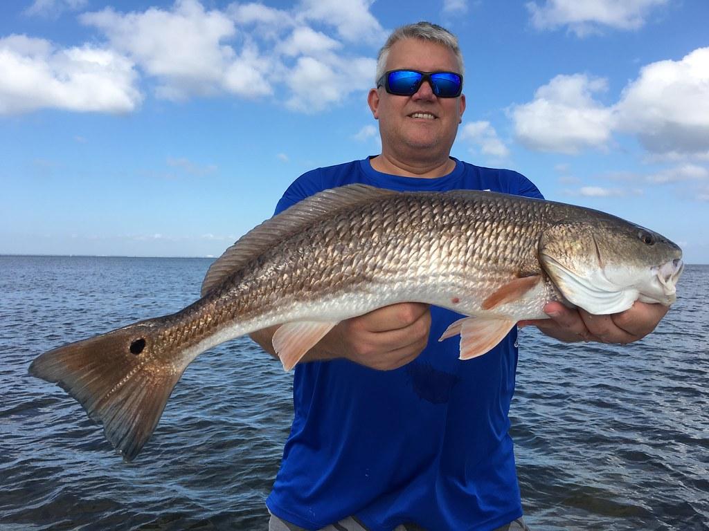 Nice Tampa Bay Redfish.      Fishing charter hotline 813-245-4738