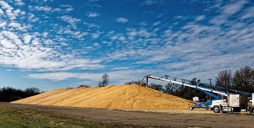 corn harvest outdoors landscape agriculture