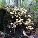 Cascade of Fungi
