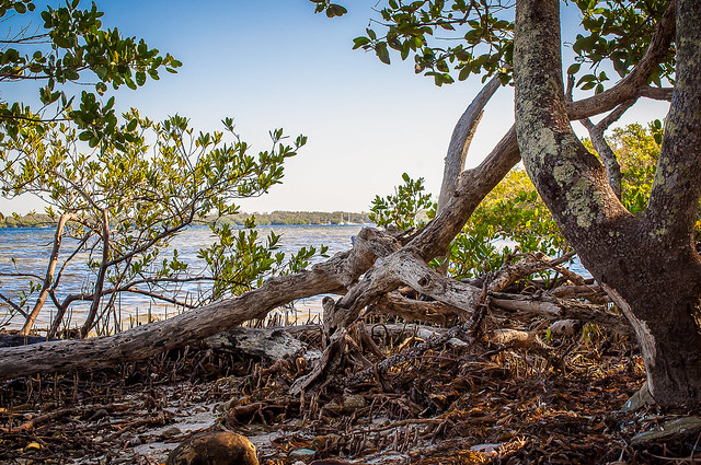 Dead Trees by the Beach - Riverview Pointe Preserve & Desoto National_