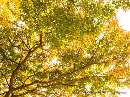 Leaves 20171109 #01
