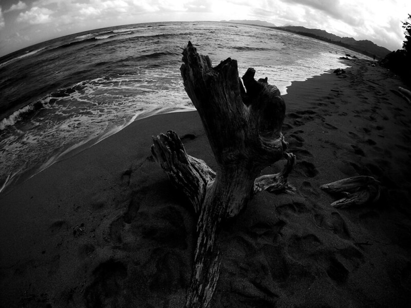 Driftwood in Wailua, Hawaii