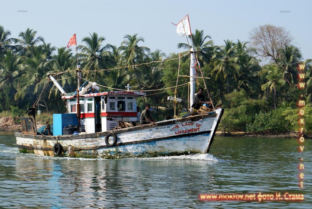 Отличная рыбалка на Гоа.