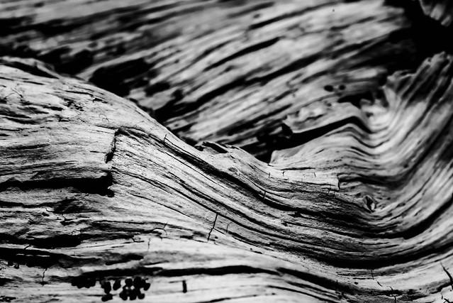driftwood03a