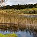 Esthwaite Water landscape