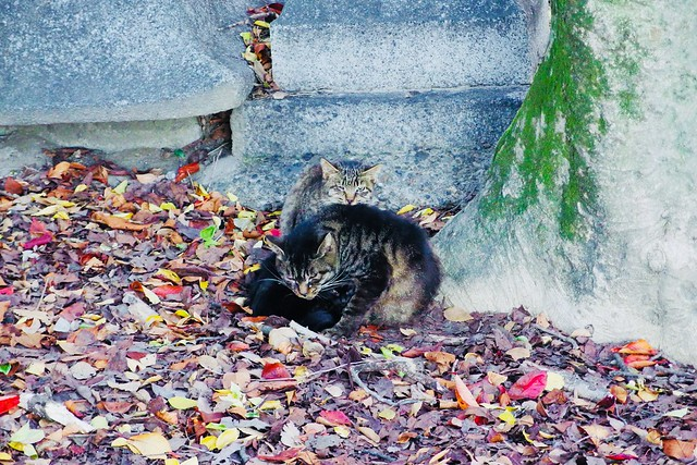 Today's Cat@2017-11-10