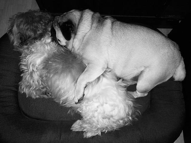 Mes deux chiens.